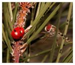 ladybug and fly by mutos