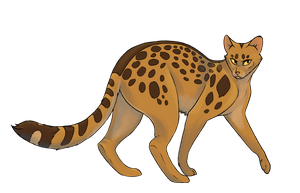 Leopardstar by taumeow