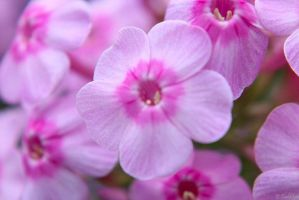 Flower Power by MacroMagnificent