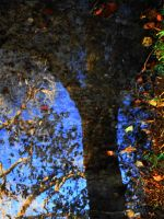 Utterance of Fall by SharPhotography