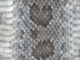 Snake Skin by stock-it