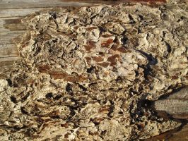Drift Wood Bark by GreenEyezz-stock