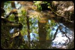 Reflections of Nature 2 by BusterBrownBB