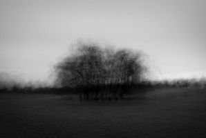 Copse in the Round by coopr