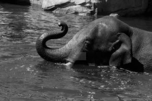 Black and White Elephant in Water by Elle-Arden