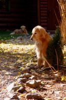 Holland Lake Lodge Doggie by JessHasArrived