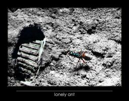 lonely ant by lordmaci