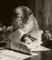 cats can read by Maerz