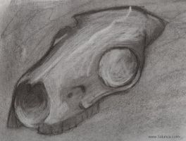 Carcoal Cow Skull by selunca