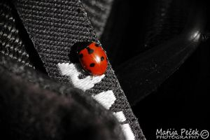Lady bug by 6v4MP1r36
