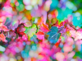 Colorful Autumn Leaves Bokeh by wildfox76