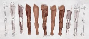 AS Drawing the Legs by ConceptCookie