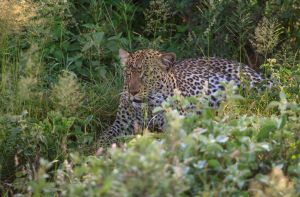 Hiding in the Vegetation by CumbriaCam