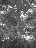 BW Trees by Booklover198273