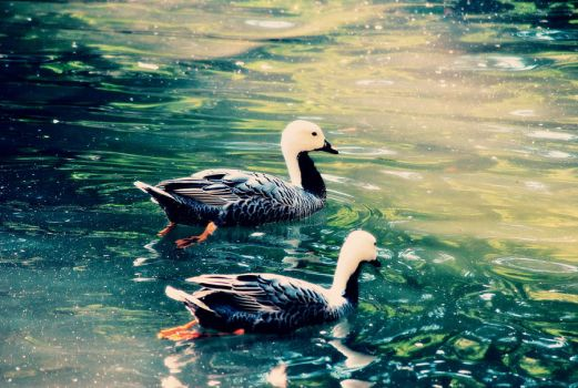 Ducklins by Snowflake20