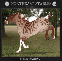 ES Shak-Dagsay 805 by NorthEast-Stables