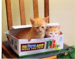 Cats in a Box by Lamanth