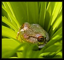 Not your normal tree frog by Canonnewbe