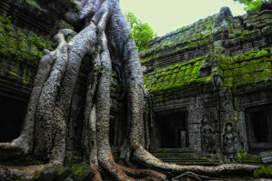 Ta Prohm - 1 by DawnRoseCreation