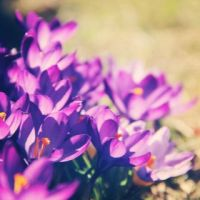 213/365 Welcome Spring by photographybyteri