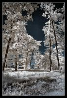 Infrared I by p0rphyrogene