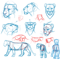 Semi-real lion doodles by AFrozenHeart