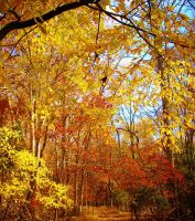 Gold Autumn Forest by ashkyler