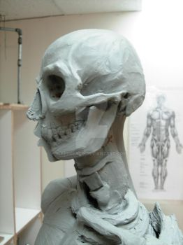 Ecorche head bone by AriaIsato