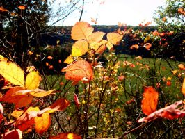 Three Orange Leaves by GestianPoet21