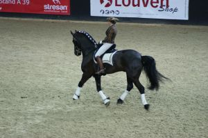 Friesian Trot sideview by EndingStories