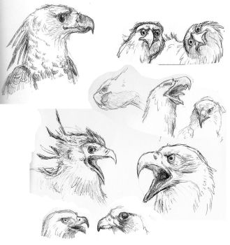 Raptor sketches by SuperGiantBird