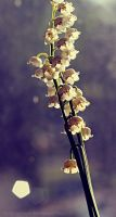Lily of the Valley by Dygee