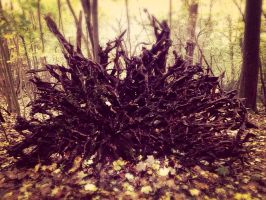 Uprooted  by Thomaskellerman