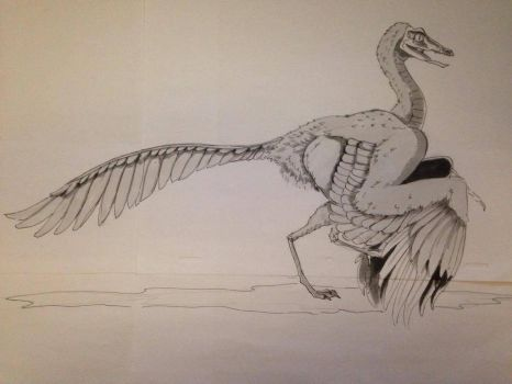 Day #8 Inktober - Archaeopteryx by Ginger-Ketchup