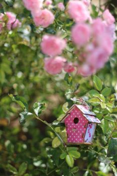 Birdhouse Stock 01 by Malleni-Stock