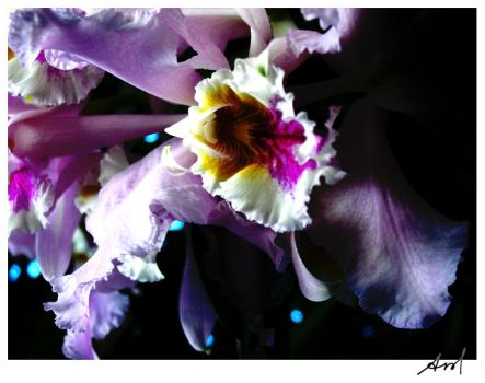Orchid 13 by AmoMiMarmota