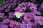 Wee Little Butterfly by Kumir123