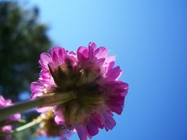 Pink flower in the blue sky by evanna11