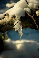 Icicle on branch by tabbycat979