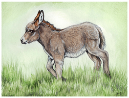Prancing Little Donkey by MorRokko