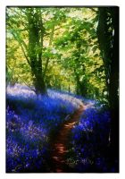 Bluebell Wood by struckdumb