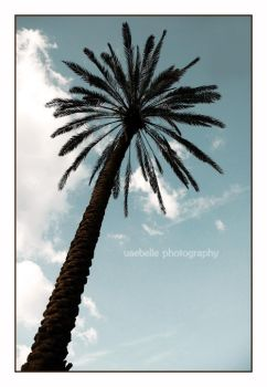 Palms So High by uaebelle