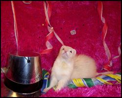 New Years, ferret style. by LarissaAllen
