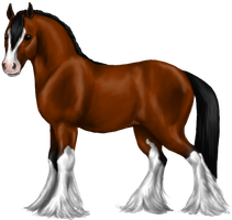 Quin: Clydesdale Mare by SilvanonOfTheOrchard