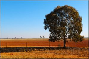 Tree and red dirt by wildplaces