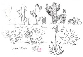 Draw Cactus by Diana-Huang