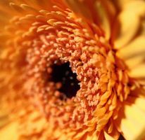 Flower Macro by FSGPhotography