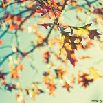 autumn, in hungary by baby-HQ