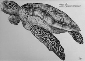 Turtle by Anna655