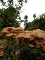 wray mushrooms 4 by harrietbaxter